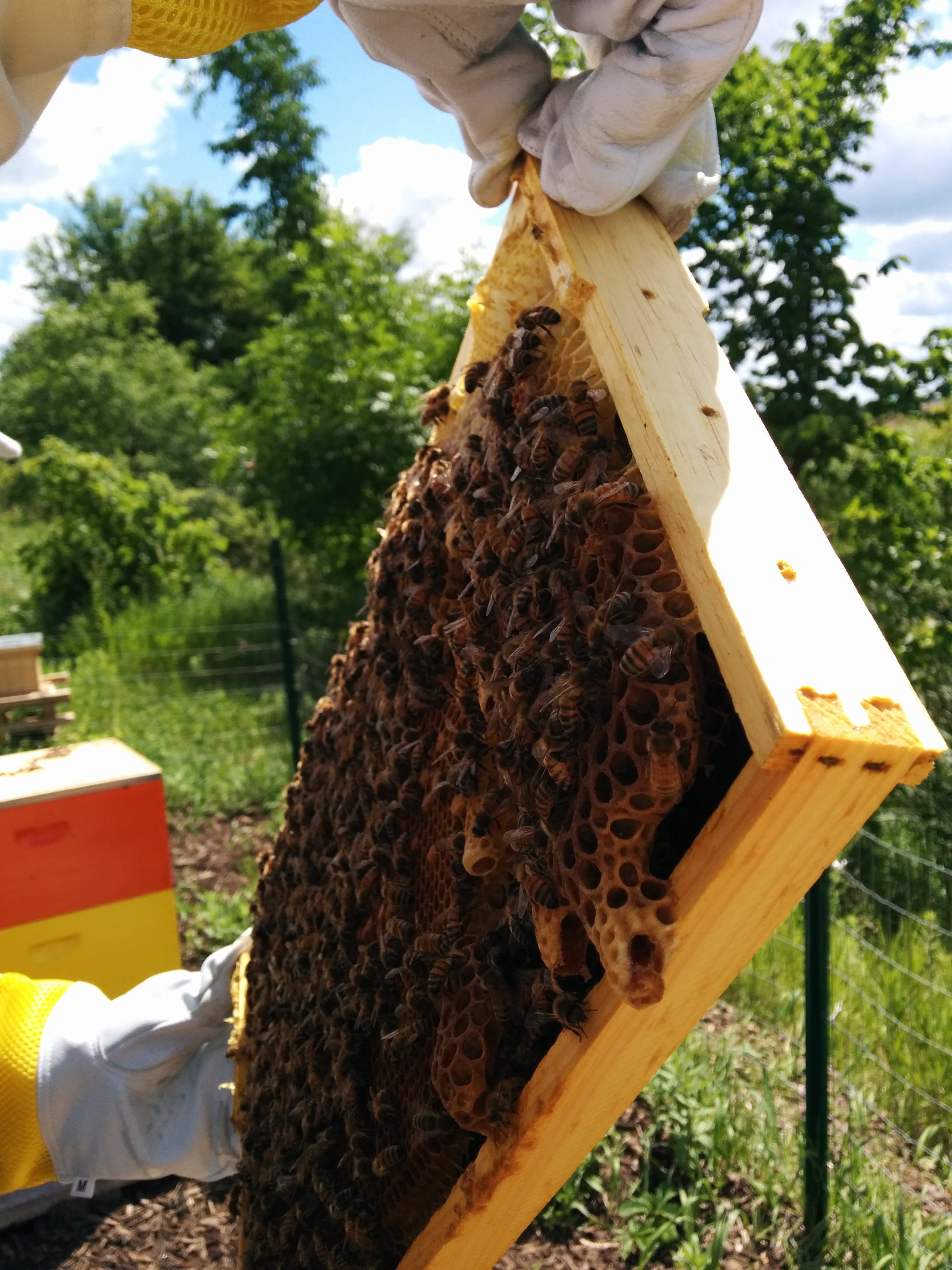 how to harvest honey miller manufacturing company blog