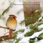 Attracting Winter Birds