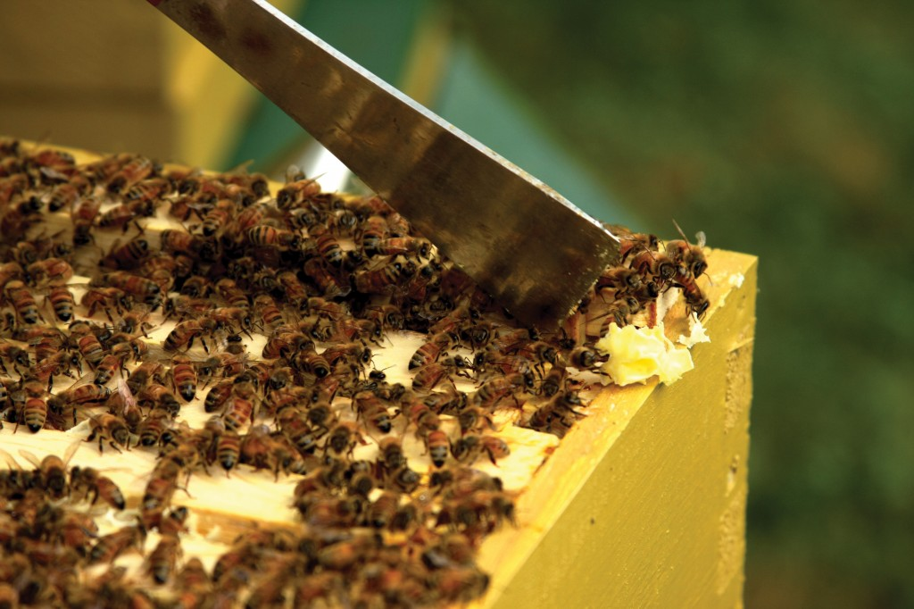 Hive tool and box