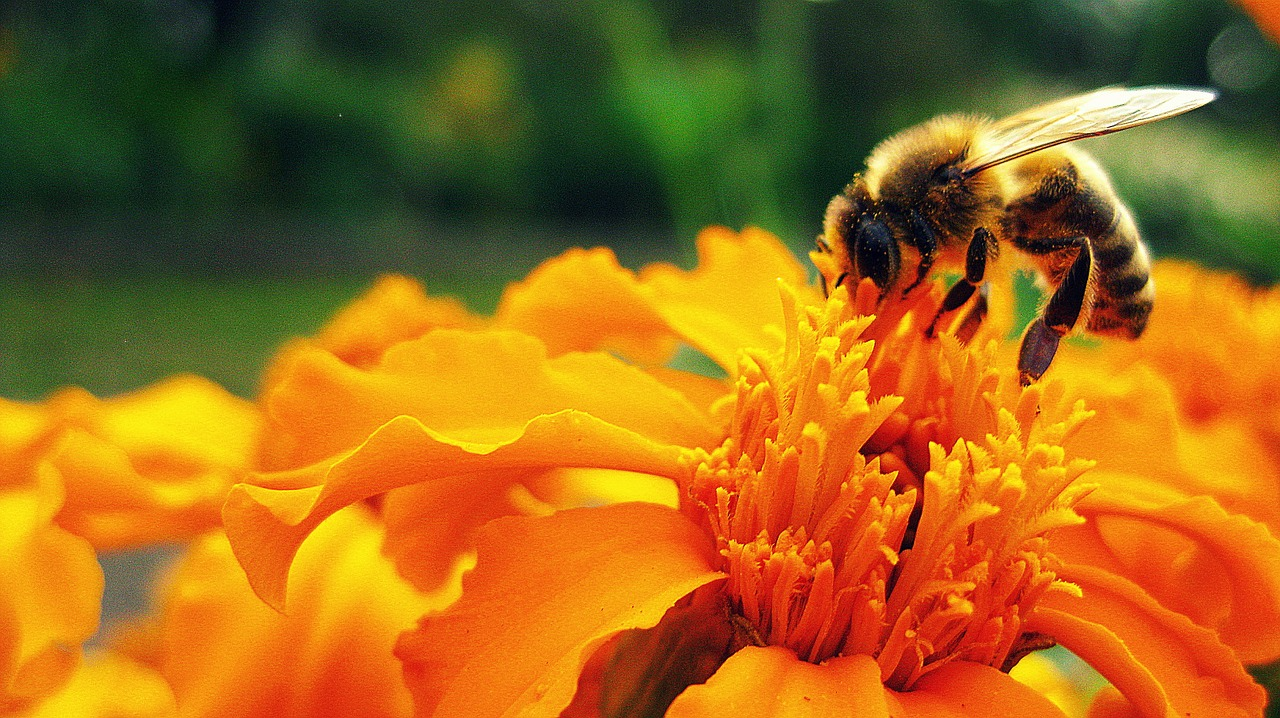 Bee visiting a flower