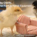 America's Next Top Chick!
