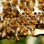 7 Tips for Keeping Happy and Healthy Bees