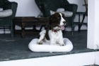 Medium Fleece Pet Bed