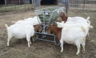 Basic Goat and Sheep Feeder