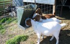 Classic 2-in-1 Goat and Sheep Feeder