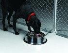 5 Quart Stainless Steel Heated Pet Bowl