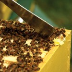Finding the Right Beekeeping Supplier