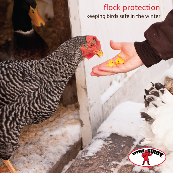 Little Giant Flock Protection