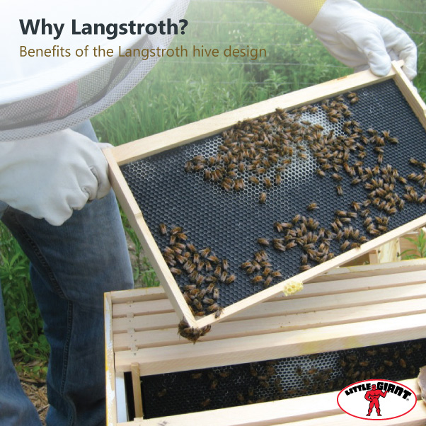 Little-Giant-Langstroth-Hive-Design