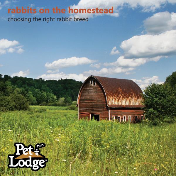 Pet-Lodge-Rabbit-Breeds