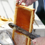 How to Harvest Your Honey