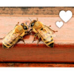 Do You Bee-lieve in Love?
