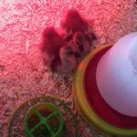 Miller Manufacturing Engineering Team: Hatching Success