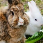 10 Things You Should Know About Rabbits: They're Not Goldfish
