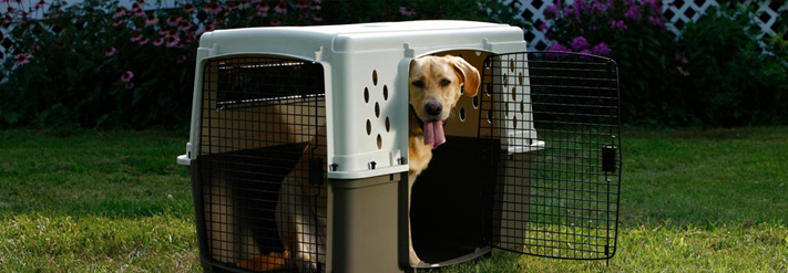 Dog Crates & Barriers