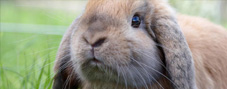 Small-Animal---Rabbit